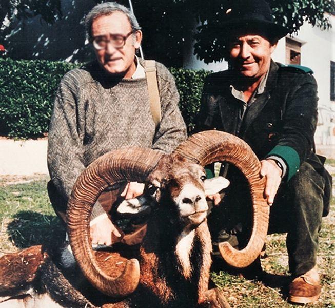 Iberian Mouflon. Los Claros