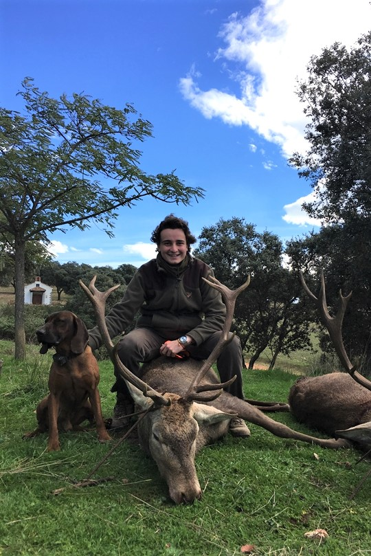 Hunting Stags. Pure Iberian Red Deers.